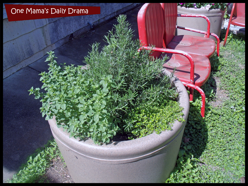 Herbs often grow better in containers.
