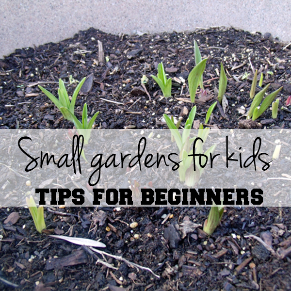 Small Garden Secrets: Small Gardens For Kids: Tips For Beginners