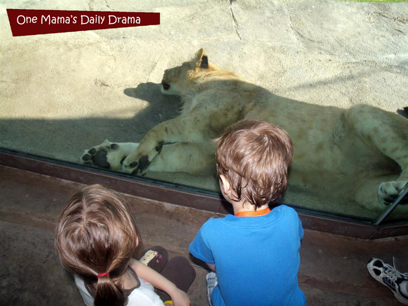 Summer kids activity: the zoo