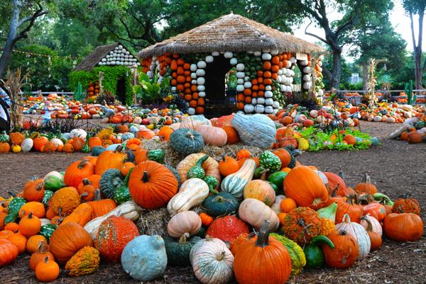 Autumn at the Arboretum   Dallas fall festival
