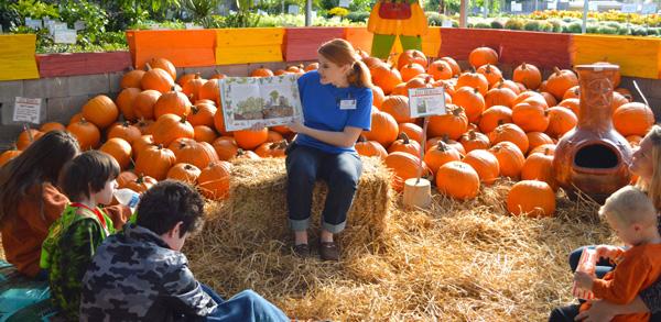 Calloway's Fall Festival   fall festival in DFW