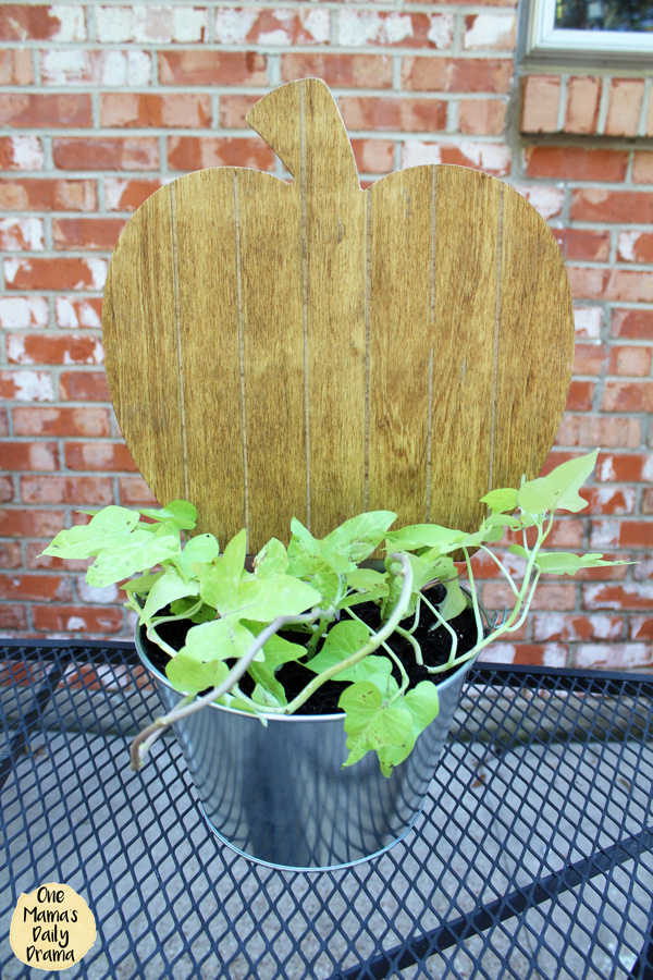 the completed planter with sweet potato vine and the stained wood pumpkin