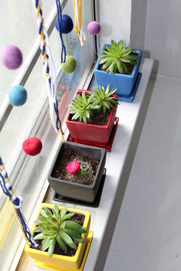 aerial view of succulent plants on a window