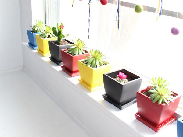 half a dozen succulents in colorful ceramic pots sitting on a window sill