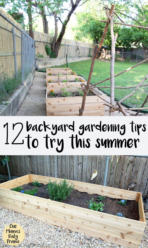 12 backyard gardening tips to try this summer: a dozen ideas for fun and easy backyard vegetables.