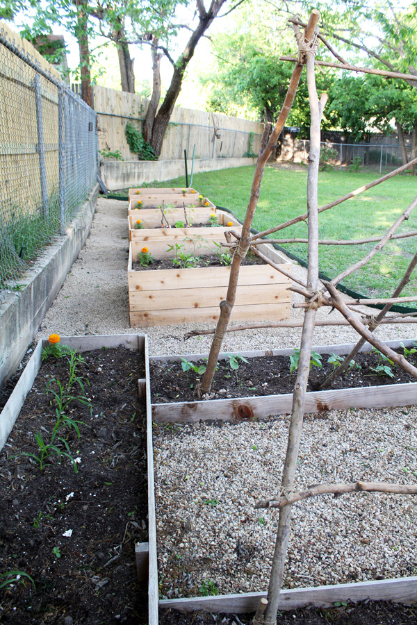 Row of raised beds in a backyard garden