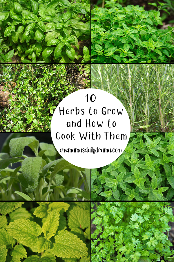 collage of green herb plants